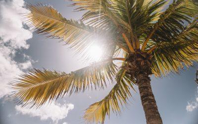 How Do Solar Panels Actually Work?
